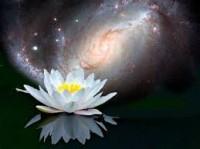 lotus-universe-200x149