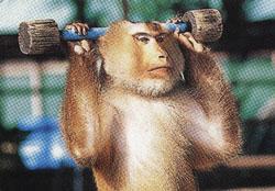 Belajar Dari Monyet